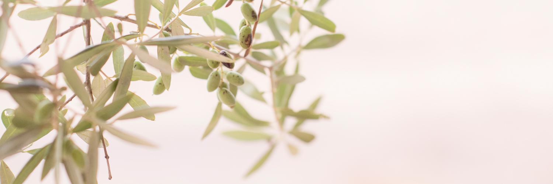 clarity cal reiet holistic retreat mallorca spain
