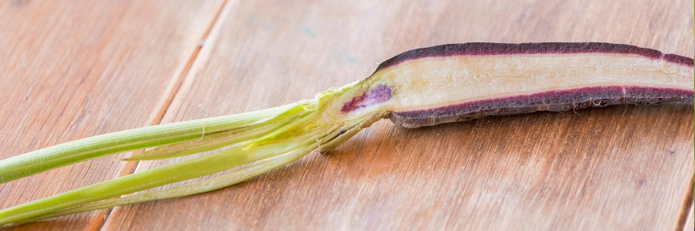 Cal Reiet Root Vegetable Plant based retreat mallorca